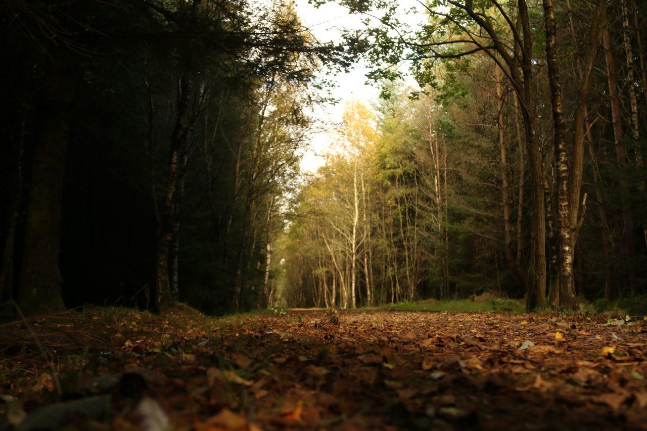 Laurencekirk's Denlethen Woods